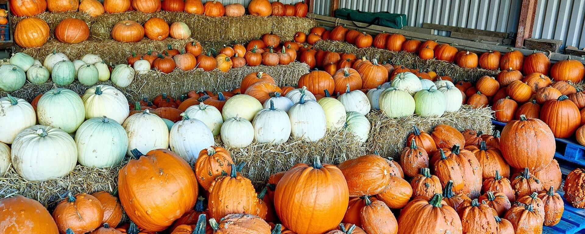 Zucche Di Halloween Terrificanti.Pumpkin Carving With Ryobi
